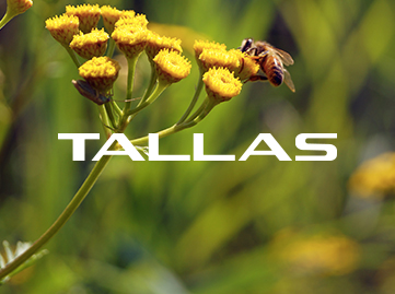 TALLAS Pumps
